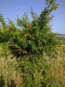 frutta biologica a Cesena